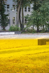 yellow (Binacat) Tags: canon eos 750d digital color colorful berlin friedrichshain autumn leaves tree filter plexiglas gelb baum blätter farbenfroh yellow