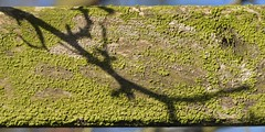 BranchLine (Tony Tooth) Tags: nikon d7100 nikkor 105mm shadow wood twig branch beam abstract leek staffs staffordshire