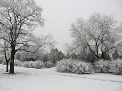 57348149 (aniaerm) Tags: snow ice frost
