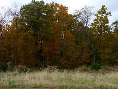 Across Road 1 (Dendroica cerulea) Tags: foliage trees landscape autumn rutgersecologicalpreserve livingstoncampus rutgersuniversity middlesexcounty nj newjersey