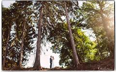 Jana & Bjoern Panorama (Matthias Römer) Tags: wedding weddingphotography d500 brenizermethod portrait weddingpictures hochzeit brideandgroom panorama