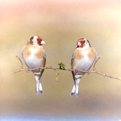 Goldfinch Duo ~ Composite (Margaret S.S) Tags: composite goldfinch duo birds painterly european