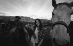 Los esplendores (Felipe Cárdenas-Támara) Tags: leicam6085ttl voigtländer15mmf45 ilfordfp4plus125 animales caballos