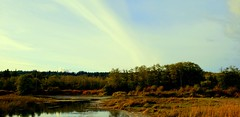High Tide going up the Union River (rve13) Tags: unionriver hoodcanal hightide thelerwetlands saltmarsh galaxys9