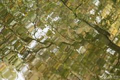 DN9A5811 (Josette Veltman) Tags: herfst autumn bos forest vechtdal overijssel
