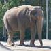 LAZ_elephants_ADSC_0049