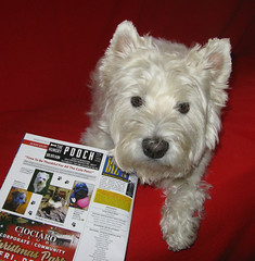 10/12B ~ Riley in Biz X Magazine (ellenc995) Tags: riley westhighlandwhiteterrier westie 12monthsfordogs18 magazine bizx thesunshinegroup coth coth5 alittlebeauty fantasticnature sunrays5 100commentgroup