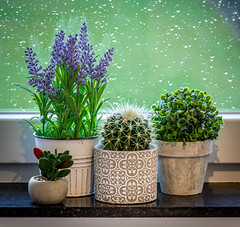 Home decoration with Flowers... [Belgium - 2018] (Jose Constantino Gallery) Tags: decoration flowers home cactus room