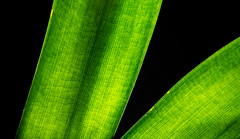GREEN. . . (CWhatPhotos) Tags: cwhatphotos photographs photograph pics pictures pic picture image images foto fotos photography artistic that have which contain green leaf leaves nature macro closeup