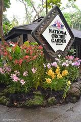 Singapore Botanic Gardens (hamid-golpesar) Tags: singaporebotanicgardens garden botanicalgarden botanic singapore flower tree raining rain park nature owaysee outdoor iran tabriz travel hamid hamidowaysee hamidgolpesar