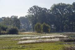 _IMG2481 (Henk de Regt) Tags: the netherlands gelderland natuur nature landscape grass bos forest trees zonsopkomst sunset sundown zonsondergang swamp nederland veluwe landschap gras water bomen moeras
