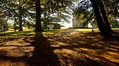 CROOME PARK SHADOWS (chris .p) Tags: croome park worcestershire nikon d610 uk nationaltrust nt trees tree autumn 2018 england september capture view