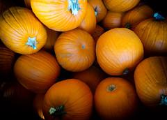 Day 1: Pumpkin Party (Amazing Aperture Photography) Tags: halloween holiday festive sony sonya6000 orange squash pumpkin pumpkins happyhalloweem spooky harvest food tasty yummy pumpkinpatch fun celebrate autumn fall october november thanksgiving