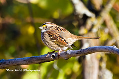 IMG_8695 (nitinpatel2) Tags: bird nature nitinpatel