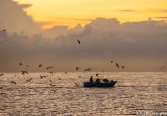 Me los quitan de la mano!!!!! (josmanmelilla) Tags: barcos pesqueros pesca barco melilla mar amaneceres amanecer españa agua nubes pwmelilla pwdmelilla flickphotowalk pwdemelilla