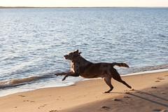 Anglų lietuvių žodynas. Žodis great dog reiškia puikus šuo lietuviškai.