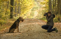 """Say cheese Gizmo"" 2018 edition (Gareth R O Dawes) Tags: airedale terrier boy"