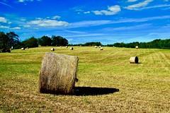 Farm Scene (redhorse5.0) Tags: hay farming fall harvest redhorse50 fallharvest hayinthefield dawsoncountyfarm northgeorgia sonya850camera ruralscene rurallandscape