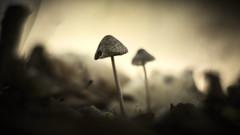 The Apocalypse (micke.vmix) Tags: carlzeiss zeiss d500 planart1450 mushroom