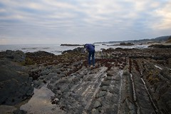 2018 Abalone Picnic -  IMG_2109 (hansk) Tags: abalone norcal northcoast searanch