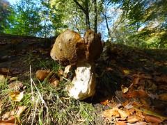 Fungus, Blaen Bran, Upper Cwmbran 19 October 2018 (Cold War Warrior) Tags: fungus fungi mushroom toadstool cwmbran blaenbran
