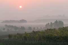 sun rising from the morning mists (lucafabbricesena) Tags: risingsun foggy landscape morning mist dawn sunrise emiliaromagna italy hill italian countryside ruralbuilding haze mistiness nikon d800 savignanosulrubicone vineyard sangiovese vine autumn october nature tree