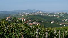 Barolo (Arco Ardon) Tags: italia italië italy torino barolo