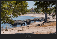 The Herd (Blende18.2) Tags: nambwa namibia caprivi kwando khwai elephant elefant herd herde crowd masse natur nature wildnis wildlife river fluss blau blue grün green orange tiere animal animals explore entdecken afrika africa safari