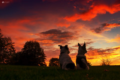 Watching the clouds go by... (Kerriemeister) Tags: maxandpaddy dogs sunset silouhette nikond5300 autumn colourful jackrussellterrier cloudporn cloudscape clouds