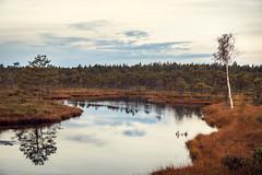 IMG_5586 (ivars.tracums) Tags: swamp fairy autumn nature beauty bog