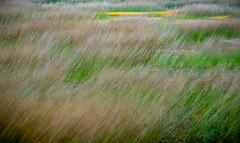 Acadia National Park (willsdad48) Tags: acadianationalpark nationalparks maine newengland coastalnewengland shoreline landscapes seascape nature hiking travel travelphotography bluehour fujifilmxt3 xt3 myfujifilm fujifilmxseries
