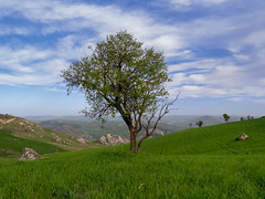 Nice View from Here... (Blueocean64) Tags: italy italia sicily sicilia agrigento nature arbre tree sky ciel clouds nuages day landscape hill mont colline extérieur light outdoor winter blue green panasonic g5 美丽 艺术 摄影 意大利 旅游 景观 架构