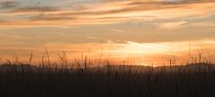 _DSC9514.jpg (thomasresch) Tags: sonneaufgang sun nordhaide panzerwiese nebel hartelholz sunrise sonne