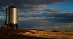 Silo (chrisroach) Tags: silo golden alberta countries canada rural fall farm daybreak light autumn