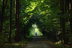summer moods (JoannaRB2009) Tags: las lasgałkówek forest woods nature path road man walking summer mood green trees foliage gałkówek łódzkie lodzkie polska poland