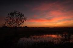"Sunset colors (Ralph Rozema) Tags: ""naturereserve"" nature netherlands naarden lake sunset natuurmonumenten naardermeer"