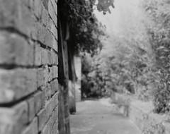 Wall corner (•Nicolas•) Tags: 100iso antique buschpressman camera collection film fomapan france issy largeformat outdoor photography nicolasthomas wall focus dof