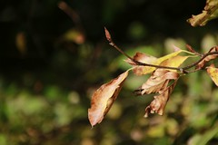 Leaves (Paul McNamara) Tags: russboroughhouse wicklow ireland leaves