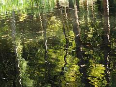 on reflection (Johnson Cameraface) Tags: 2018 september autumn olympus omde1 em1 micro43 mzuiko 1240mm f28 johnsoncameraface reflection peakdistrict derbyshire chatsworthhouse