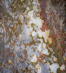 Natures Camo (Jeffrey Balfus (thx for 3 Million views)) Tags: blackhawkcc sonyilce6300 sonyalpha mirrorless sony6300 sonyemount nature