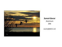"Sunset Geese • <a style=""font-size:0.8em;"" href=""https://www.flickr.com/photos/124378531@N04/45312920322/"" target=""_blank"">View on Flickr</a>"
