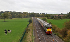 """D213 """"Andania"""" - Beeston Castle (Andrew Edkins) Tags: d213 andania canon geotagged class40 englishelectric type4 cows rain beestoncastle travel trip raltour excursion storm whistler overcast field cheshire england saphostrains october 2018 autumn diesel trees"""