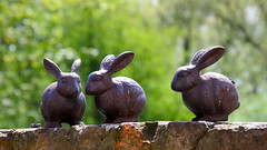 Two Bunnies Chatting, One Alone (Jonathan Makin Photography) Tags: rabbit rabbits bunny bunnies model toy ornament garden decoration outdoor