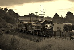 Wearing the livery of the former Government-owned Victorian Railways; heritage locomotives X31+B74 haul the Cruise Express tour train through Wandong, bound for Seymour, Vic. (B&W) (Amateur-Hour Photography) Tags: mynikonlife nikond610 nikon d610 train trains trenes railroad railways railway locomotive locomotives diesel diesels passengertrain australiantrains australianrailways victorianrailways vr x31 b74 southernaurora