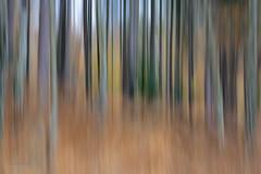 Striped autumn forest (ARTUS8) Tags: verwackelt nikon24120mmf40 abstraktesgemälde color farbe artus flickr longtimeexposure langzeitbelichtung baum herbst abstrakt nikond800 colour verschwommen verwischt panning tree wald