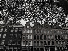 Amsterdam, the Netherlands (bobbykwibus) Tags: amsterdam tree boom blackwhite blackandwhite building holland thenetherlands nederland house history