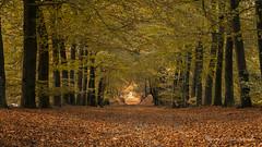 Autumn in Salland (2) (Ruud.) Tags: ruudschreuder nikon nikond850 d850 holland paysbas overijssel overijsselslandschap landschap landscape paysage landschaft paisajes natuur natur nature autumn fall herfst herbst sallandseheuvelrug netherlands