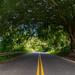 Green Road to Hana Maui Hawaii