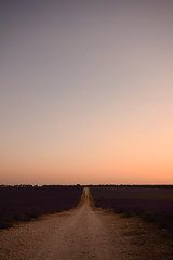 Campos de Lavanda en Brihuega (Hachimaki123) Tags: paisaje landscape brihuega lavanda lavender atardecer sunset camino path