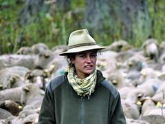 Vu... (François Magne) Tags: berger bergère brebis troupeau estive alpage pastoraloup transhumance scene pastorale fz 300 lumix loup couchade